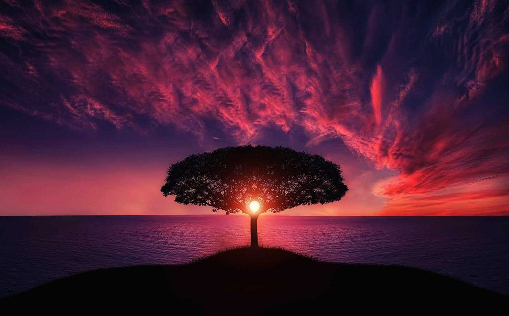 Reiki Healing Tree